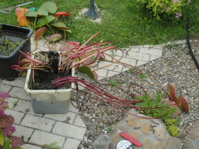 Подготовка водоема к весне 3